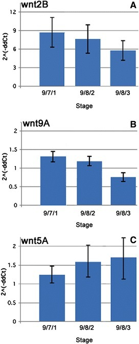 Temporal expression profile of Wnt candidate genes in colonies at early blastogenic stages. Quantitative reverse transcriptase PCR (qRT-PCR) expression analysis of Wnt ligands Wnt2B (A), Wnt9A (B), and Wnt5A (C) within the first three stages of the blastogenic life cycle. The ordinate values are relative expression levels normalized to the expression level of Ef1-α in 9/7/1 stage according to the 2-∆∆Ct (see 'Methods' section) and displayed in arbitrary units.