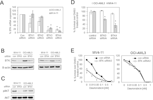 BTK targeted siRNA inhibits survival of MV4–11 but not OCI-AML3.(A) FLT3-ITD (MV4–11) and non FLT3-ITD (OCI-AML3) AML cell lines were transfected with control siRNA and 4 BTK siRNA and then cultured for 24 h before RNA extraction analysis for target gene expression using QRT-PCR. (B) Western blot analysis for total BTK in response to transfected control, BTK3 and BTK4 siRNA and (C) for pAKT and total AKT in response to transfected control and BTK4 siRNA. The presented blots were derived from multiple gels. The membranes were cut based on molecular weights and probed with the antibody of interest. (D) FLT3-ITD (MV4–11) and non FLT3-ITD (OCI-AML3) cells were transfected with control siRNA and BTK siRNA3 and 4 and then cultured for 48 h and then assessed by CellTiterGlo. (E) FLT3-ITD (MV4–11) and non FLT3-ITD (OCI-AML3) cells were transfected with control siRNA and BTK siRNA3 and then cultured for 24 h and then daunorubicin was added in increasing doses and then cultured for a further 48 hours and then assessed by CellTiterGlo. *Indicates P < 0.05 Mann Whitney test comparing the BTK siRNA transfected samples to control siRNA samples.