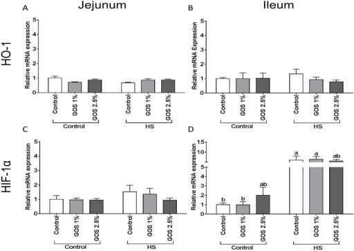 The effect of heat stress exposure on the mRNA expression of HO-1 and HIF-1α in jejunum and ileum of chickens fed a control or GOS diet.Chickens fed a control or GOS (1 or 2.5%) diet for 6 days before being exposed to either control or heat stress conditions for 5 days. The mRNA expression of HO-1 (A, B) and HIF-1α (C, D) in jejunum (A, C) and ileum (B, D) measured by qRT-PCR. Results are expressed as relative mRNA expression (fold of control, normalized to β-actin) as mean ± SEM, n = 6–10 animals/experimental group. Different lower-case letters denote significant differences among groups.