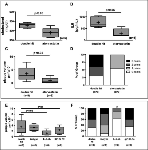 High-dose statin therapy 3 days prior to and 3 days after surgery in mice exposed to the double hit, and IL-6 signaling pathway interception. Mice were treated with 80 mg/kg body weight/day atorvastatin, blocking antibodies against IL-6 or the selective inhibition of IL-6 trans-signaling by gp130-Fc by a single subcutaneous injection. (A) Total cholesterol (n=5; P<0.05), (B) IL-6 plasma levels (n=4; P<0.05) and (C) plaque volume (double hit n=8; atorvastatin n=9; P<0.05) decreased significantly under atorvastatin. Mann–Whitney U-test. (D) Plaque complexity as assessed by the score was likewise significantly reduced (Fisher's exact test, double hit n=8; atorvastatin n=9; P<0.05). (E) The blocking antibody against IL-6 reduced plaque volume, whereas the selective inhibition of IL-6 trans-signaling by gp130-Fc did not yield any reduction in plaque volume. Mann–Whitney U-test; double hit, gp130-Fc n=8; isotype n=5; IL-6 ab n=8; P<0.05. (F) Plaque complexity was reduced by blocking antibody (Fisher's exact test; double hit, gp130-Fc n=8; isotype n=5; IL-6 ab n=8; **P<0.05 vs double hit).