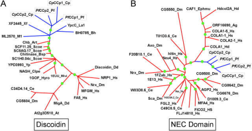 Phylogenetic trees showing affinity of apicomplexan versions to bacterial discoidin (A) and animal NEC (B) domains. Principal nodes supported by bootstrap values of >65% are shown with a filled green circle. Clades containing apicomplexan sequences are colored blue and apicomplexan sequences are boxed. Genes are designated by their gene names and the abbreviated source species names are as follows: Art, Arthrobacter spp.; At, Arabidopsis thaliana; Bh, Bacillus halodurans; Bsp, Bacillus spp. D-2; Ce, Caenorrhabditis elegans; Clpe, Clostridium perfringens; Cp, Cryptosporidium parvum; Dd, Dictyostelium discoidium; Dm, Drosophila melanogaster; Hs, Homo sapiens; Hyro, Hypomyces rosellus; Lal, Lactococcus lactis; Mivi, Micromonospora viridifaciens; Pf, Plasmodium falciparum; Scoe, Streptomyces coelicolor; Xf, Xylella fastidiosa; Yp, Yersinia pestis.