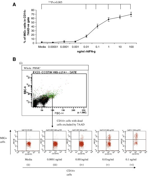 Investigation into the amount of rhIFN-γ needed to induce a MIG ICS response. Increasing concentrations of rhIFN-γ were added to PBMC from 6 donors. The cells were then incubated for 6 hours before and after the addition of brefeldin A. The data are presented as the mean percentage of MIG+ cells within the CD14+ population ± standard deviation (SD) (fig. 4A). A significant difference in MIG secretion was seen between the media and 0.01 ng/ml rhIFN-γ (P=0.005 -Student's paired T-test), and all the higher concentrations of rhIFN-γ. Dot plots of one volunteer's MIG responses to rhIFN-γ are shown in figure 4B. Firstly dead cells were excluded with 7AAD dead cell marker. Secondly the CD14+ cells were then selected against forward scatter. The CD14+ population is shown in green in plot (i). The following plots (ii-vi) show the MIG production within the CD14+ population. Responses to media (ii), 0.0001 ng/ml rhIFN-γ (iii), 0.001 ng/ml rhIFN-γ (iv), 0.01 ng/ml rhIFN-γ (v) and 0.1 ng/ml rhIFN-γ (vi) are shown.