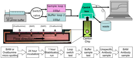 Experimental setup overview. (Above) A schematic overview of the fluidic setup; (Below) Flowchart of the BAM assay on the CantiChip4® system .