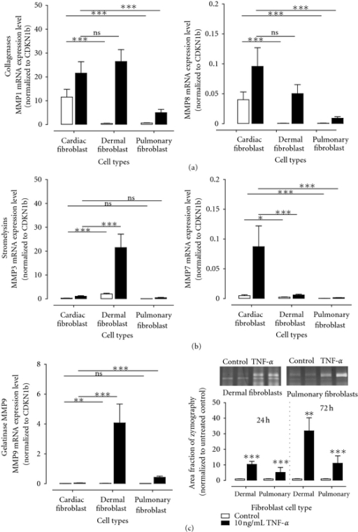 Alteration of MMP expression levels in cardiac, dermal, and pulmonary fibroblasts after treatment with 10 ng/mL TNF-α for 24 hours. Different alteration of collagenases (a), stromelysins (b), and MMP9 (c) expression levels after TNF-α treatment. MMP9 activity was further determined in the cell culture supernatant of cardiac, dermal, and pulmonary fibroblasts. Representative bands of MMP9 activity in dermal and pulmonary cell culture supernatants with or without TNF-α for 72 hours are shown. No MMP9 activity could be detected in cell culture supernatant of cardiac fibroblasts. All mRNA expression levels are shown as absolute expression using the formula 2−ΔCt.