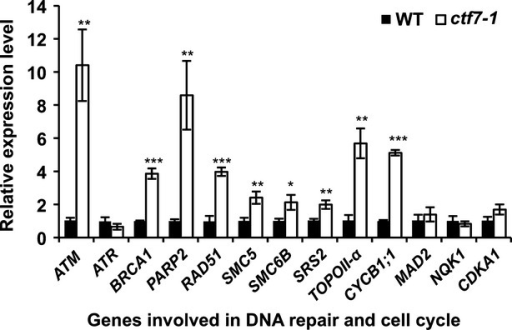 DNA-repair genes are upregulated in leaf tissue of ctf7-1.Complementary DNAs from 1-week-old wild-type (WT) and ctf7-1 seedlings were generated and used in quantitative real-time PCR. Transcript levels of ATM, PARP2, BRCA1, RAD51, SMC5, TOPOII-α and CYCB1;1 are elevated in ctf7-1. Data are shown as means ± SD (n = 3) from three biological samples. Asterisks represent significant differences (*P < 0.5, **P < 0.01, ***P < 0.001; Student's t-test) relative to WT.