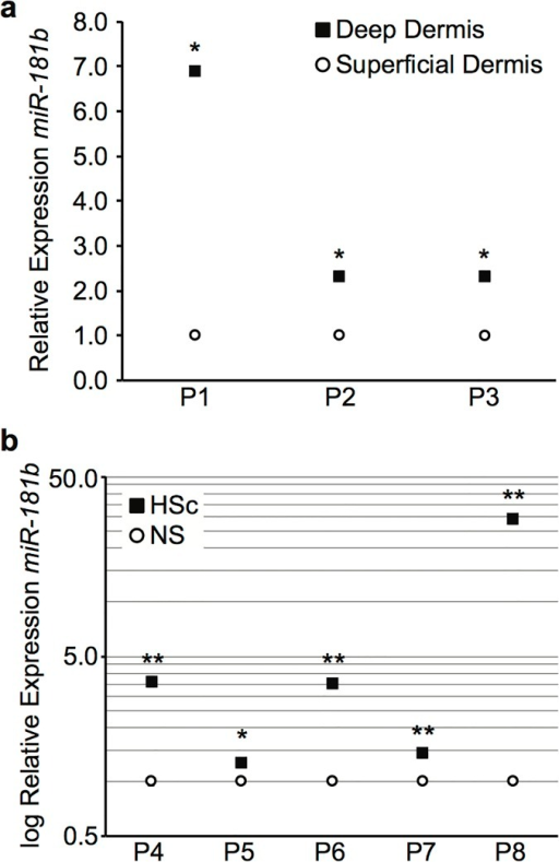 Relative expression of miR-181b in matched superficial and deep dermis and site-matched NS and HSc biopsies.Total RNA was extracted from tissue specimens using a chilled pestle and mortar and Trizol for relative quantitation using RT-qPCR. (a) Relative expression of miR-181b in matched superficial and deep dermis of NS (mean ± SEM, n = 3 samples per patient, * P < 0.001). (b) Relative expression of miR-181b in matched NS and HSc (mean ± SEM, n = 3 samples per patient, * P < 0.05, ** P < 0.01).