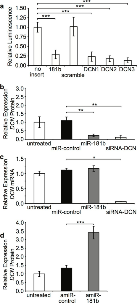 Regulation of DCN by miR-181b.HEK293A were cultured in DMEM + 2% FBS and transfected with pmirGLO constructs containing various miRNA binding sites and (a) relative fluorescence quantitated using a luminometer to determine relative knockdown by miR-181b (mean ± SEM, n = 4, *** P ≤ 0.01). SF were cultured in DMEM + 2% FBS and transfected with miR-control, synthetic miR-181b or siRNA-DCN and (b) DCN protein in supernatant was measured by ELISA (mean ± SEM, n = 3, ** P < 0.03), and (c) DCN mRNA was measured using RT-qPCR on total RNA (mean ± SEM, n = 3, * P < 0.05). (d) DF were cultured in DMEM + 2% FBS and transfected with antagomiR-control (amiR-control) or antagomiR-181b (amiR-181b) and DCN protein in supernatant was measured by ELISA (mean ± SEM, n = 3, *** P < 0.01).