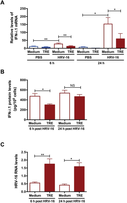 Trehalose inhibits IFN-λ1 expression and promotes HRV-16 replication in normal human primary airway epithelial cells.Normal human tracheobronchial epithelial cells were treated with medium or trehalose (TRE, 100 mM) for 48 h and then infected with HRV-16 (104 TCID50/well) for 2 h. After removing the free viruses, cells were incubated with medium or trehalose for additional 6 and 24 h. IFN-λ1 mRNA levels (A) and IFN-λ1 protein levels (B) were assessed by quantitative real-time RT-PCR and ELISA, respectively. HRV-16 RNA levels (C) were examined by quantitative real-time RT-PCR. Data are presented as mean ± SEM (n = 5 independent experiments). NS, not significant; *, p<0.05; **, p<0.01.