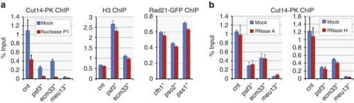 Presence of ssDNA at condensin binding sites.(a) Treatment of condensin-bound DNA fragments with nuclease P1, which is specific to ssDNA/single-stranded RNA. DNA fragments purified by Cut14-PK ChIP from prometaphase cells were treated with P1 on beads and then eluted and measured by qPCR (left). P1 sensitivity was specific to condensin-bound fragments, because bulk DNA at the same sites (purified by anti-histone H3 ChIP from prometaphase cells) or cohesin-associated DNA (purified by Rad21-GFP ChIP from asynchronous cells) showed no sensitivity (middle and right, respectively). (b) RNase treatment of condensin-bound DNA fragments. RNase A or RNase H treatment, which digests single-stranded RNA or RNA within DNA:RNA hybrids, respectively, caused no reduction in qPCR measurements, precluding the possibility that the condensin-DNA association is mediated by RNA. Error bars represent s.d. (n=2, technical replicates in qPCR). cnt, central core regions of centromeres 1 and 3.