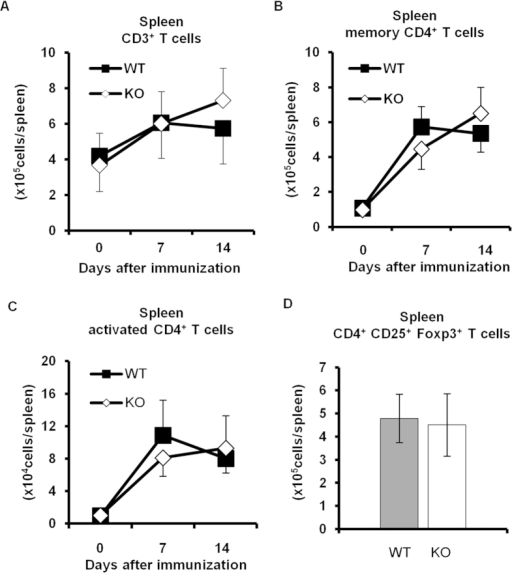 T cell proliferation and activation in Padi4 KO mice after the GPI immunization.(A–C) The numbers of CD3+ T cells, CD4+ CD62L− CD44+ memory T cells, and CD4+ CD62L− CD69+ activated T cells in spleens were counted 0, 7, and 14 days after the immunization. Pre-immunized (WT n = 3, Padi4 KO n = 3), 7 days after the immunization (WT n = 6, Padi4 KO n = 6), 14 days after the immunization (WT n = 11, Padi4 KO n = 13). (D) The number of CD4+ CD25+ Foxp3+ regulatory T cells in spleens was counted 14 days after the immunization (WT n = 8, Padi4 KO n = 10). Gray bars; WT, open bars; Padi4 KO.