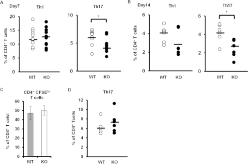 Th17 cell differentiation in Padi4 KO mice after the GPI immunization.(A,B) Proportions of Th1 and Th17 cells in the total amount of CD4+ T cells from inguinal lymph nodes 7 and 14 days after the immunization. Seven days after the immunization (WT n = 9, Padi4 KO n = 11), 14 days after the immunization (WT n = 6, Padi4 KO n = 6). (C) The CFSE dilution of CD4+ T cells from GPI-immunized inguinal lymph nodes was measured in response to an ex vivo stimulation with GPI (WT n = 3, Padi4 KO n = 3). (D) Proportion of in vitro differentiated Th17 cells in CD4+ T cells under Th17-polarizing conditions (WT n = 3, Padi4 KO n = 3). *p < 0.05, ***p < 0.001.