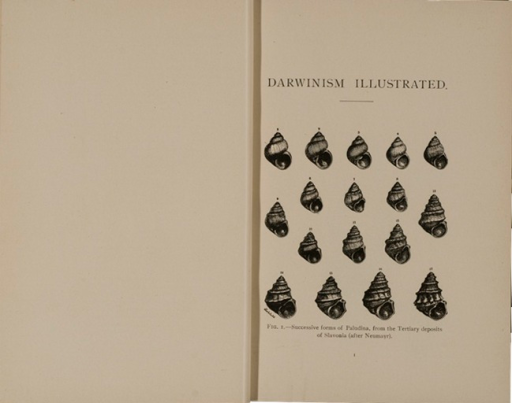 <p>Image of fig. 1 from Darwinism illustrated : wood-engravings explanatory of the theory of evolution / selected and drawn under the direction of Prof. George J. Romanes. Chicago : Open Court Pub. Co., 1892. The plate shows 17 illustrations of paludina. At head of page: Darwinism Illustrated.</p>