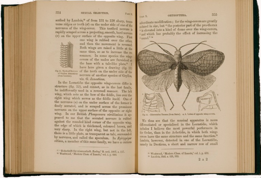 <p>Image of facing pages (p. 354-355) from The descent of man, and selection in relation to sex / by Charles Darwin. London : John Murray, 1871. Page 354 is primarily text with small illustration of teeth of the Gryllus. Page 355 has illustration of locust with two details of its wing covers.</p>