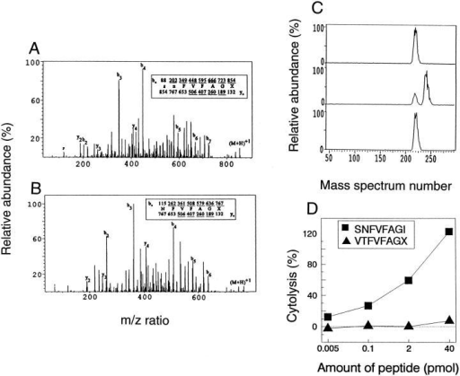 Structural characterization of the tumor epitope. (A) CAD mass spectrum recorded from the (M+H)+1 ions (m/z 854) of the tumor antigen.  (B) CAD mass spectrum recorded on (M+H)+1 ions (m/z 767) from the tumor antigen after a single round of Edman degradation. The ions observed in  each spectra are underlined. (C) Results of coelution experiments in which synthetic peptides SNFVFAGL or SNFVFAGI were added to the biologically  active subfraction 37-19 containing the tumor antigen. (D) synthetic peptides SNFVFAGI and VTFVFAGX (X = L or I) were loaded onto RMA-S cells  in the indicated concentrations, and tested for lysis by the anti-A CTL clone. The E/T ratio was 5:1. SNFVFAGI is specifically recognized by the anti-A  CTL clone.