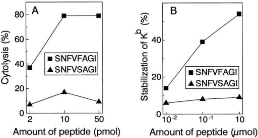 The mutant p68 peptide sensitizes RMA-S cells for lysis by the  anti-A CTL clone, and stabilizes MHC class I on the cell surface, but the  corresponding wild-type peptide does not. The mutant peptide SNFVFAGI and the wild-type peptide SNFVSAGI were loaded onto RMA-S  cells in the indicated amounts. (A) the loaded cells were tested for lysis by  the anti-A CTL clone in a 51Cr-release assay at an E/T ratio of 2:1. (B)  loaded cells were analyzed for cell surface expression of H-2Kb using fluorescence activated cell sorter analysis, by indirect immunofluorescence with  the monoclonal anti-H2-Kb antibody Y-3 and a polyclonal goat anti– mouse IgG conjugated to fluorescein isothiocyanate as a second step. Percent stabilization of H-2Kb was calculated by subtracting the amount of  H-2Kb present on RMA-S cells shifted to 37°C without added peptide,  from the amount of H-2Kb present on RMA-S cells shifted to 37°C in  the presence of peptide, and dividing by the amount of H-2Kb present on  RMA-S cells which had been kept at room temperature throughout the  experiment.