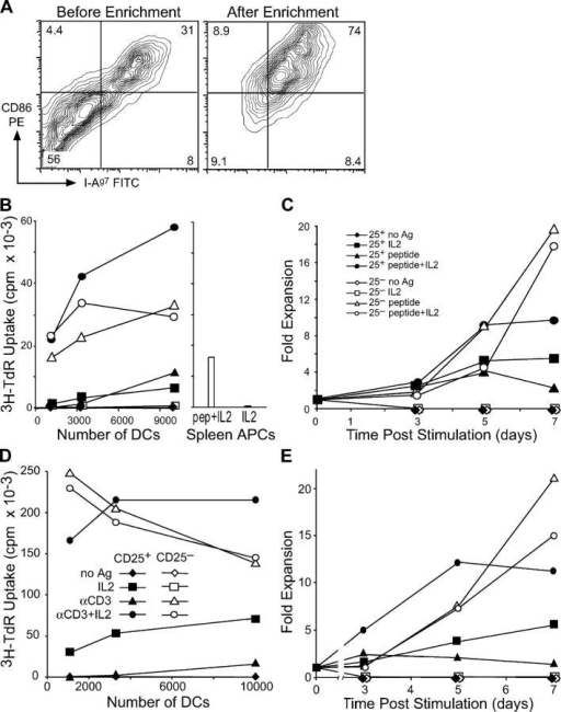 NOD DCs induce growth of CD25+ CD4+ T cells from NOD.BDC2.5 or NOD mice. (A) In vitro–derived NOD DCs were stained with antibodies specific for CD86 and MHC class II before (left) and after (right) magnetic bead enrichment of CD86+ cells. (B) CD25+ CD4+ or CD25− CD4+ T cells sorted from BDC2.5 TCR transgenic mice were cultured with CD86+ NOD DCs with and without 30 ng ml−1 BDC peptide and IL-2. In the same experiment, NOD spleen cells were used with IL-2, with and without BDC peptide (right). A 12-h [3H]thymidine pulse was given on day 3. (C) Same as B, but the dose of BDC peptide was 100 ng ml−1 and the fold increase in T cell numbers was monitored by counting on days 3, 5, and 7. (D) CD25+ or CD25− CD4+ T cells were isolated from NOD mice and cultured with NOD CD86+ DCs, with and without anti-CD3 and IL-2 as indicated. Proliferation was determined by [3H]thymidine incorporation on day 3. (E) As in D, but cells were counted on days 3, 5, and 7, and the fold increase in cell numbers was calculated. One result of at least three similar experiments is shown.