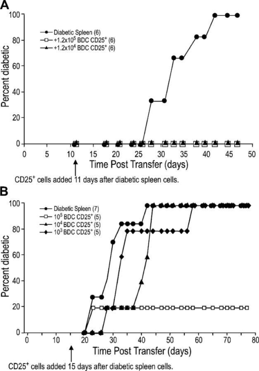 BDC2.5 CD25+ CD4+ T cells can still regulate diabetes when given after diabetogenic cells. (A) NOD.scid females were injected with 8 × 106 diabetic spleen cells and 11 d later were injected with either PBS or the indicated number of DC-expanded CD25+ CD4+ T cells from BDC2.5 mice. The difference between diabetic spleen alone to diabetic spleen plus 105 or 104 DC-expanded CD25+ CD4+ cells was significant (P = 0.002). (B) As in A, except 107 diabetic spleen cells were added 15 d before the indicated number of DC-expanded CD25+ CD4+ T cells from BDC2.5 mice. The p-value for diabetic spleen alone versus adding 105 BDC2.5 regulatory T cells is 0.055 and versus adding 104 BDC2.5 regulatory T cells is 0.0595. The number of mice in each group is indicated in parentheses.