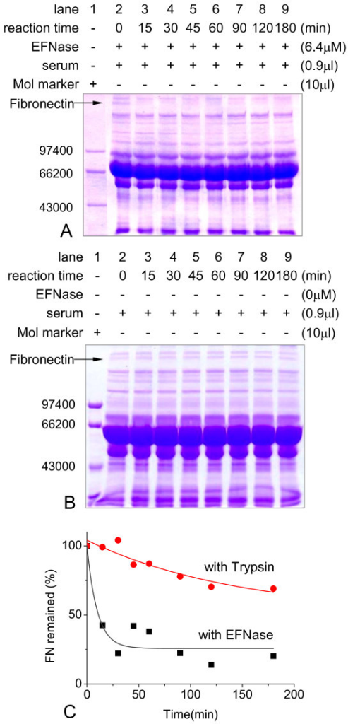 Digestion of human serum in the presence of EFNase. EFNase (final concentrations as indicated) was incubated with human serum (25 μl) at different time intervals during the degradation and then aliquots were taken for SDS-PAGE (panel A). Under the same conditions, serum in the absence of EFNase was used as negative control (panel B). Panel C was the comparison of the hydrolytic activity of EFNase and trypsin by densitomitric scanning analysis of Figure 2A and Additional file 1B.