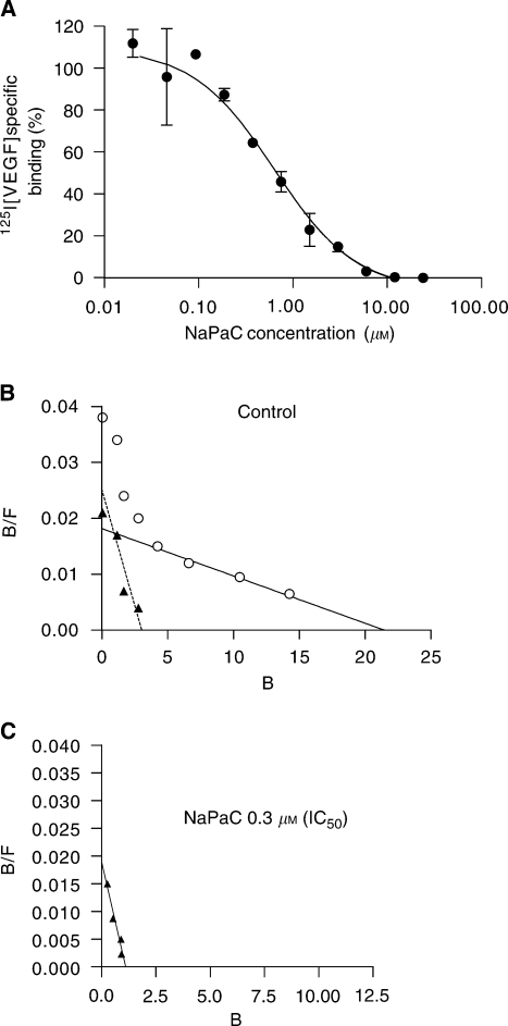 NaPaC inhibits the VEGF165 binding to A431 cells. (A) Cells were incubated with a fixed concentration of [125I]VEGF165 (7 pM) in the absence or presence of NaPaC at various concentrations (0.0375–24 μM). (B, C) Scatchard analysis was performed using 7 pM [125I]VEGF165 and unlabelled VEGF165 at various concentrations in the absence (B) or presence (C) of 0.3 μM NaPaC (IC50).