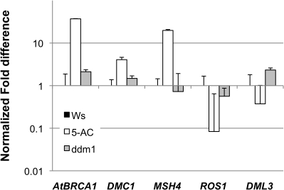 DNA damage repair genes are upregulated after 5-AC treatment.Quantitative RT-PCR expression ratios (5-AC and ddm1 normalized to Ws untreated control) for genes associated with repair of DNA damage or chromatin structure. Error bars indicate 95% confidence interval. AtBRCA1, ARABIDOPSIS THALIANA BREAST CANCER SUSCEPTIBILITY1 (At4g21070); DMC1, DISRUPTION OF MEIOTIC CONTROL1 (At3g22880); ROS1, REPRESSOR OF SILENCING1 (At2g36490); MSH4, MUTS HOMOLOG4 (At4g17380).