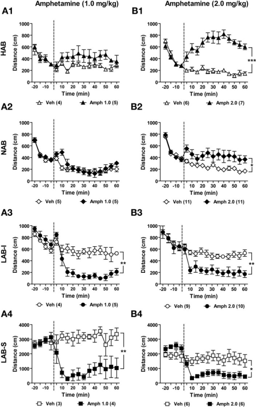 effects of amphetamine on locomotor activity