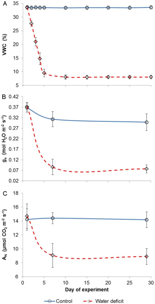 Volumetric water content (A; VWC), stomatal conductance (B; gs) and net assimilation rate (C; AN) throughout the experiment.Excluding day 1, values of the two groups were significantly different for every measuring date. Vertical bars represent means ± standard deviations (n = 10).