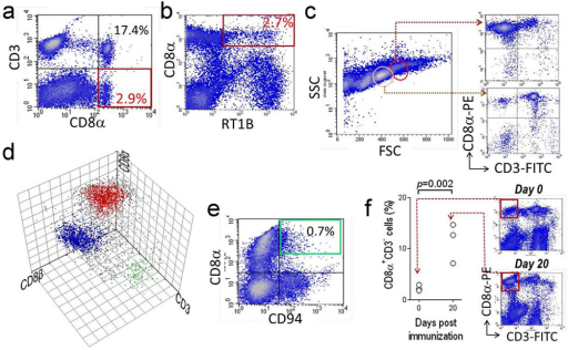 Identification of PBMC CD8α+β−RT1B(MHC-II)+CD3− population and its expansion after immunization(a and b) Flow cytometry analyses on PBMC show a CD8α+CD3− population (red box in a) and a CD8α+RT1B+ population (red box in b). (c) FSC/SSC plot analysis of sorted PBMC CD8α+ cells shows two morphologically distinct populations (red and pink circle), which were CD8α+CD3− (right upper panel) and CD8α+CD3+ T cells (right lower panel), respectively. (d) Three color flow cytometry shows distinct populations of CD8α+β−CD3− cells (red dots) and CD8α+β+CD3+ T cells (blue dots) among sorted PBMC CD8α+ cells. A small CD8−CD3+ T cell population (green dots), probably CD4+ T cell contaminant, also can be seen. (e) Flow cytometry on PBMC shows a majority population of CD8α−CD94+ NK cells and a minor CD8α+CD94+ population (green box). (f) Expansion of the PBMC CD8α+CD3− population after immunization (left panel)(n=3 for normal and immunized group). Right two panels are representative flow cytometries on PBMC at d0 and d20 post immunization with pCol(28–40) for comparison of CD8α+CD3− populations (red box).