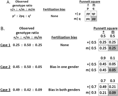 Gamete bias at fertilization and conceptus genotype frequencies. '+' and 'm' designate gametes that carry the wild-type or the mutant allele, respectively. Gamete frequencies are shown on the sides of the matrix, and conceptus genotype in the cells of the matrix. Each side of the matrix represents one of sexes in each mating. A. General case, where p and q denote alternative alleles. B. Arbitrary numbers were used to illustrate the consequences of gametic bias. Note that all eggs are fertilized and litter size remains unchanged in each scenario; only the genotypic ratio changes.
