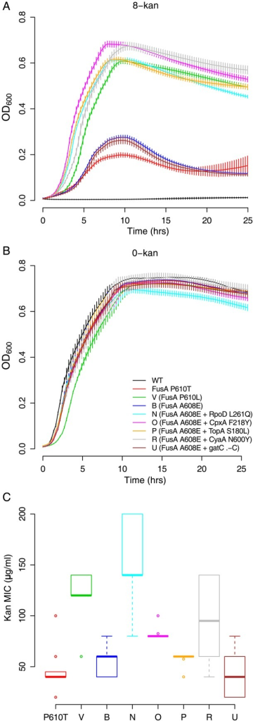 Multiple EF-G mutations confer kanamycin resistance which is increased by second site mutations. (A) Growth curves of the EF-G mutants in 8-kan and (B) plain LB (error bars represent standard deviation from eight replicates; legend from B is applicable throughout the figure). The stationary-phase OD600 for the isolates containing the FusAA608E alone, and in combination with gatC .-CC (cytosine insertions) mutation, is lower in 8-kan than for any of the other mutants. This suggests that the second site mutations in RpoD, CpxA, TopA and CyaA may improve FusAA608E strain's ability to grow at low kanamycin concentrations. Of note, the FusAP610T mutation isolated from 4-kan populations does not grow as well as the other fusA mutant strains in 8-kan. (C) Kanamycin MICs (n = 8; box plots as defined in description of Figure 2C) for the isolates with the mutations in EF-G (fusA). The FusAP610L mutation might provide higher resistance to kanamycin than the FusAP610T mutation (P < 10−5; two-sample independent t-test). However, the FusAA608E mutation alone or in combination with gatC .-CC (cytosine insertions) or TopAS180L confers resistance levels similar to the FusAP610T mutation (P = 0.289, 0.817 and 0.151, respectively). In combination with CyaAN600Y, CpxAF218Y,and RpoDL261Q, the FusAA608E mutation does better and has higher resistance than either FusAP610T or FusAA608E alone (P = 0.006, 0.0003 and <10−5, respectively). The emergence of some of these mutations in P1, although a resistant mutation is already present, may be explained by this observation.