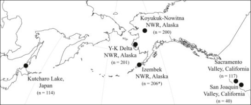 Approximate locations in North America and East Asia at which northern pintail tissue samples were collected during 2011–2012 to test for haemosporidian infection. Regions (i.e. Alaska, California, and Japan) and sub-regions (Koyukuk-Nowitna NWR, Yukon-Kuskokwim Delta NWR, Izembek NWR, Sacramento Valley, San Joaquin Valley) for sampling locations are indicated (NWR = National Wildlife Refuge). The number of tissue samples per location is indicated in parentheses. Sample tissue was whole blood unless indicated by an asterisk (signifying wing muscle tissue).