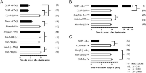 Role of G-Protein-mediated signal transduction in timing of the switch to ecdysis behavior.(A) Inhibition of Gαo signaling using two different fly lines expressing the pertussis toxin gene (PTX(2), PTX(3) on 2nd and 3rd chromosomes, respectively). (B) Enhancement of Gαo signaling by overexpression of a constitutively active form (GαoQ205L). (C) Overexpression of Gαq signaling in CCAP and kinin neurons by expression of a wild type Gαq. Error-bars represent standard error of mean (S.E.M). Data was analyzed using Mann-Whitney test (** P < 0.001, *** P < 0.0001).