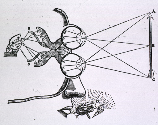 <p>Portion of head with the eyes represented above each other and focused on an arrow; lines extend from the eyes to the mid and terminal points of the arrow; visual receptor portion of the brain is shown, and the sense of smell is indicated by a flower.</p>