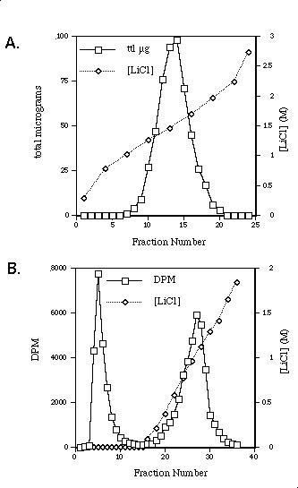 Anion Exchange Chromatography of Unlabelled or Tritiated Hp. Unlabelled Hp (A) or tritiated Hp (B) was added to 1 ml of DEAE anion exchange resin pre-equilibrated in 0.05 M Acetate pH 4.0 and allowed to bind. A LiCl gradient was directly applied to the unlabelled Hp while the tritiated Hp was washed extensively in buffer without LiCl before the start of a LiCl gradient. The X-axis corresponds to fraction number, the left Y-axis corresponds to total μg (A) or DPM (B), and the right Y-axis corresponds to LiCl concentration.