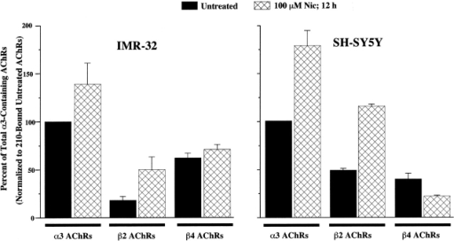 Incubation in Nic increases the amount of α3β2 AChRs in IMR-32 and SH-SY5Y cells, but not α3β4 AChRs. The bar graph represents the relative amounts of [3H]epibatidine binding to AChRs immunoisolated on mAb-coated microwells from Triton-X100 extracts of either IMR-32 or SH-SY5Y cells in the presence and absence of Nic (100 μM) overnight. mAb 210 binds α3 and α5 AChRs, mAb 295 binds β2 AChRs, and mAb 337 binds β4 AChRs. For both cell lines, Nic caused an increase in binding to AChRs isolated on 210-coated wells which was the same in magnitude as the amount of increase in binding to AChRs isolated on mAb 295-coated wells. AChRs isolated on mAb 337-coated wells were not altered significantly by Nic. For IMR-32 (untreated), mAb 210 isolated AChRs bound ∼12 fmol of [3H]epibatidine, which corresponds to roughly 1,800 AChRs per cell when assuming two binding sites per AChR, whereas for SH-SY5Y, mAb 210 isolated AChRs bound ∼3 fmol of [3H]epibatidine corresponding to ∼600 AChRs per cell.