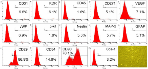 Flow cytometric analysis of rat adipose-derived mesenchymal stem cells (ADMSCs). Flow cytometry results of ADMSCs (the percentage shown in figure was mean value of n = 3) on day 14 after cell culturing showed the CD29 + and CD90+ cells were the highest population of stem cells. Spindle-shaped morphological feature of the stem cells were shown in the right lower corner (200×).