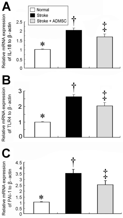 mRNA expressions of inflammatory mediators in brain infarct area. Significantly higher mRNA expressions of (A) interleukin (IL)-18, (B) toll-like receptor (TLR)-4, and (C) plasminogen activator inhibitor (PAI)-1 in group 2 than in group 3 and normal controls (group 1), and notably higher in group 3 than in group 1. (n = 10 per group) * vs. †, p < 0.001; * vs. ‡, p < 0.01; † vs. ‡, p < 0.04.
