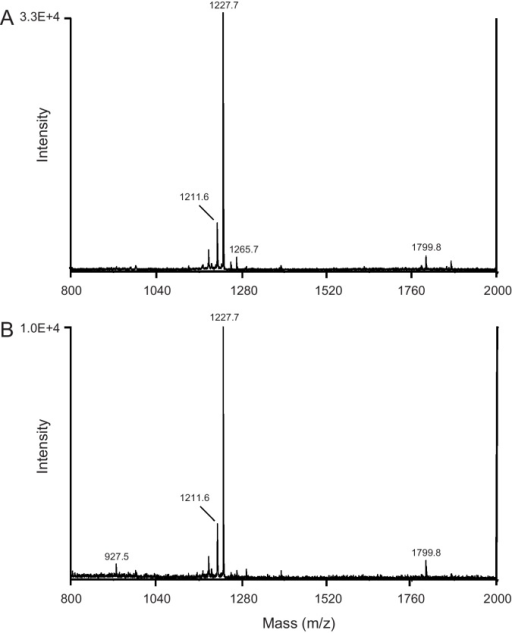 MALDI/TOF mass spectra of a peptide extract of MAGs/SVs (A) and whole MAGs (B). (A) Five pairs of tissues were extracted into acidified methanol (0.1 ml) of which 1 μl of the sample was mixed with 1 μl MALDI matrix solution and dried on a MALDI plate for analysis. The spectrum shows the presence of prominent peaks at m/z 1211.8 and 1227.8. (B) A pair of MAGs from a single male mosquito were placed directly on a MALDI plate, rinsed with water to eliminate salts, mixed with matrix solution, dried and analyzed as described in Section 2.