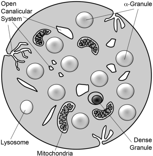 Lysosome Diagram Black And White Circuit Connection Diagram