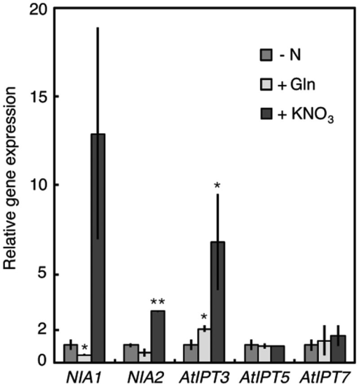 Effects of MSX pre-treatment on the induction of AtIPT transcript accumulation by exogenous nitrogen compounds. Arabidopsis seedlings were grown under standard conditions for 2 weeks after germination and transferred to nitrogen-free medium for 5 d. The seedlings were pre-treated with 1 mM MSX for 2 h and then incubated for 2 h with nitrogen-free medium (–N), 50 mM glutamine (+Gln) or 10 mM KNO3 (+KNO3) solution containing 1 mM MSX. Total RNA prepared from roots was subjected to qPCR which was performed in triplicate. The amounts of transcripts were normalized to that of the Actin 2 transcript. The experiment was independently repeated twice. The values were normalized with respect to those obtained in the nitrogen-free medium, and mean values with the SD are shown. Asterisks indicate significant differences between the nitrogen-free treatment and the Gln or nitrate treatment, according to Student's t-test (**P < 0.01; *P < 0.05).