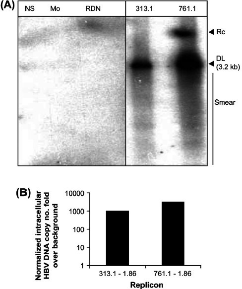 (A) Huh7 cells transfected with the 313.1-1.86 and 761.1-1.86 constructs depicts Southern hybridization of intracellular DNA (Fig. 4A) at 72 h post-transfection. NS: Non specific DNA, Mo:Mock transfection, RDN: cells transfected with replication deficient negative control plasmid pRLΔ(77-1246)WTSPGE, M: 100pg marker consisting of linear double stranded fragments of HBV DNA, not shown, 313.1 : cells transfected with 313.1-1.86 construct, 761.1: cells transfected with 761.1-1.86 construct, RC: relaxed circular DNA. DL: double stranded linear DNA. The smear indicates HBV replication intermediates. (B) Relative levels of intracellular HBV DNA in Huh7 cells transfected with 313.1-1.86 and 761.1-1.86 constructs, by Taqman based quantitative real time PCR at 72 h post-transfection. The HBV DNA copy number fold over background normalized for transfection efficiency is depicted.