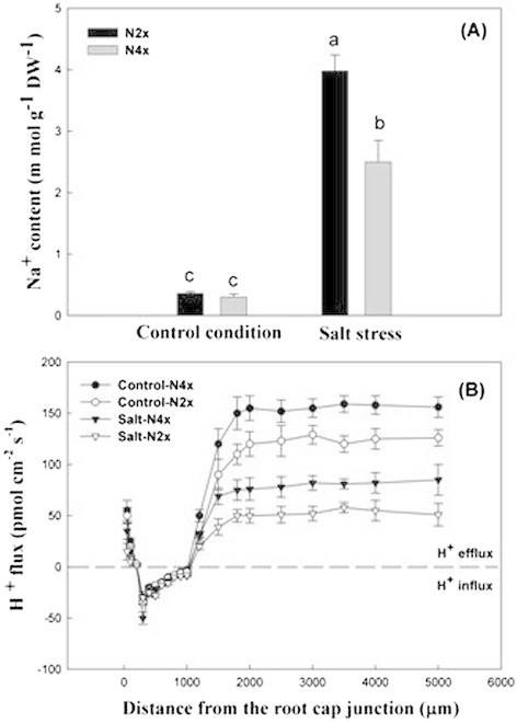 Na+content and H+flux of Nipponbare-2x and -4x under salt stress. (A) Na+ content in Nipponbare-2x and -4x. (B) H+ flux in Nipponbare-2x and -4x.
