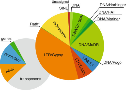 Classification of Arabidopsis DM regions. A summary of functional classification of 5,049 DM regions containing 10 CpG or more between 54 inflorescence and 98 leaf samples of Arabidopsis thaliana.