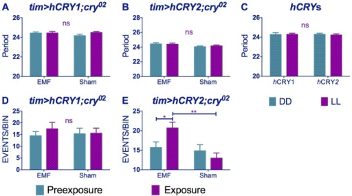 hCRY2 but not hCRY1 reveals a sensitivity to EMFs.(A) tim>hCRY1; cry02 or (B) tim>hCRY2; cry02 transformants do not show period shortening under EMF (pre-exposure*EMF/sham interaction hCRY1 F(1,48) = 1.41, p = 0.3 hCRY2 F(1,54) = 0.2, p = 0.63 (see Table S1). (C) hCRY1/2 flies do not show period increase in dim blue LL compared to DD (F(1, 82) = 0.125, p = 0.72) (D) hCRY1 are not hyperactive under EMF (F(1,48) = 0.33, p = 0.56). (E) hCRY2 are hyperactive under EMF exposure. Mean ± sem (see Table S2, post hoc * = p<0.05, ** = p<0.01).