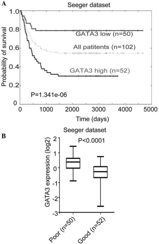 Association between GATA3 expression and survival in patients with neuroblastoma. (A) Kaplan-Meier analysis of progression-free survival for the Seeger database, with the log rank test P-value indicated. A cutoff value of 0.0365 was used to separate the patients into high and low GATA3 expression groups. (B) Box plot of GATA3 expression levels in tumors from groups of patients with good and poor prognoses.