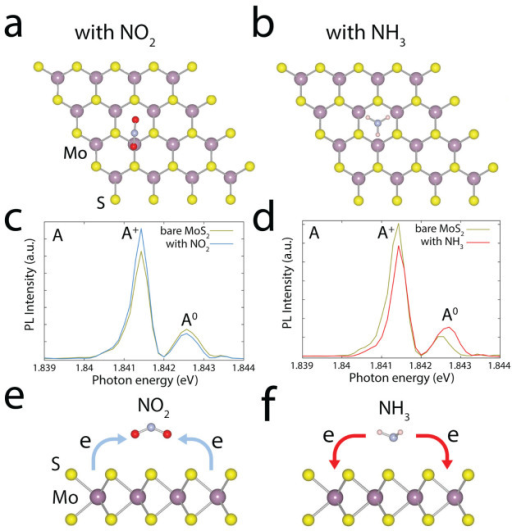 Adsorption configurations and in situ PL.(a, b) Top views of the most favourable configurations for NO2 (a) and NH3 (b) on the MoS2. The calculated adsorption energies were −0.14 eV for NO2 and −0.16 eV for NH3. The negative adsorption energies indicate that the adsorption process is exothermic, indicating that NO2 and NH3 molecules are likely to be adsorbed onto the surface of the MoS2. (c, d) In situ PL spectra recorded from the MoS2 with NO2 (c) and NH3 (d) molecules. The overall intensity of the PL spectra changes in the presence of NO2 and NH3 molecules. The PL intensities of the A+ trions and A0 excitons are either suppressed or increased by changes in the concentrations of the charge carriers. (e, f) Schematics of the charge density differences for MoS2 in the presence of NO2 (e) and NH3 (f) gas molecules. NO2 molecules on the surface of MoS2 act as electron acceptors, whereas NH3 molecules act as electron donors.