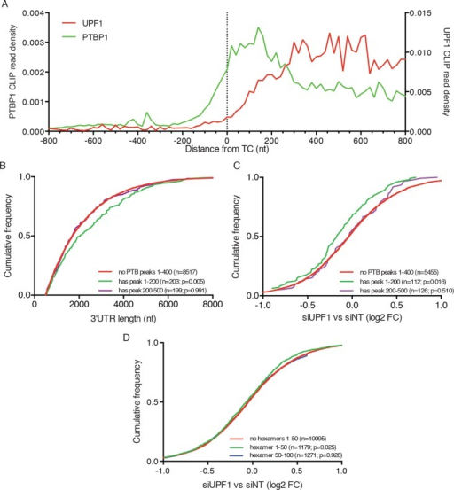 PTBP1 binding near stop codons is correlated with 3'UTR length and NMD evasion.(A) Density of PTBP1 (green, left axis) and UPF1 (red, right axis) CLIP reads derived from peaks called using PIPE-CLIP software, plotted relative to TC position. A bin size of 20 nt was used to determine read density; bin sizes ranging from 5 nt to 20 nt and plots of peak occurrences showed similar patterns. (B) CDF plot of annotated 3'UTR lengths among mRNAs containing or lacking PTBP1 CLIP peaks centered in the indicated intervals relative to the TC. P-values were calculated in two-tailed K-S tests of 3'UTR lengths in the indicated mRNA classes compared to mRNAs lacking PTBP1 peaks. Only mRNAs with 3'UTRs greater than 500 nt were included to avoid bias due to selection of transcripts containing CLIP peaks. (C) CDF plot of log2 fold changes in mRNA abundance in UPF1 siRNA vs siNT RNAseq. mRNAs with 3'UTR lengths in the middle 50% of the overall distribution (484–2251 nt) were selected to avoid confounding effects of increased 3'UTR lengths among mRNAs with PTBP1 peaks. P-values were determined by two-tailed K-S tests, comparing the indicated mRNA classes to mRNAs lacking PTBP1 peaks from +1–400 nt. (D) CDF plot as in C. mRNAs were classified according to the presence of one or more predicted high-affinity PTBP1 hexamer binding sites in the indicated intervals relative to annotated TCs (see Materials and methods for details; the top 6 hexamers identified in previous PTBP1 CLIP seq, associated with >50% of observed CLIP peaks, were used for this analysis; Xue et al., 2009). Statistical significance was determined by two-tailed K-S tests comparing mRNAs with putative PTBP1 binding sites in the indicated positions to mRNAs lacking hexamer binding sites at positions from 1 to 50 nt downstream of the TC.DOI:http://dx.doi.org/10.7554/eLife.11155.020