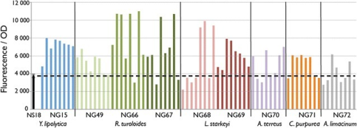 Overexpression of DGA1 genes in Y. lipolytica strain NS18. Nine DGA1 genes (Table 2) under the control of the Y. lipolytica GPD1 promoter were randomly integrated into the NS18 genome and 8 transformants for each gene were analyzed by fluorescence-based lipid assay after 72 h of growth in nitrogen-limited media. The average with standard deviation from triplicate experiments is shown for the parent strain. Fluorescence was measured at excitation 486 nm and emission 510 nm and normalized by cell optical density (OD) at 600 nm