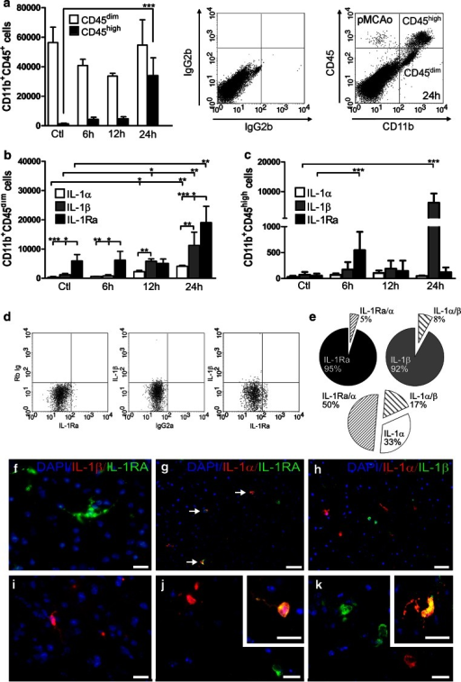 IL-1Ra, IL-1α and IL-1β are expressed by largely different microglial subsets. a Flow cytometric quantification of CD11b+CD45dim microglia and CD11b+CD45high leukocytes in non-lesioned C56BL/6 controls (Ctl) and in C56BL/6 mice 6, 12 and 24 h after pMCAo (left), n = 4–8/group, with dot plots (right) showing flow cytometric profiles and the isotype quadrant from a mouse with 24 h survival. b, c Flow cytometric quantification of IL-1Ra+, IL-1α+, and IL-1β+ CD11b+CD45dim microglia (b) and CD11b+CD45high leukocytes (c), n = 4/group. Statistical data are presented as mean ± SD (Kruskal–Wallis test with Dunns post hoc test). *P < 0.05, **P < 0.01, ***P < 0.001. dDot plot (left) with isotype quadrants showing gated CD11b+CD45dim microglia expressing either IL-1Ra or IL-1β 24 h after pMCAo. ePie charts show the percentage of gated CD11b+CD45dim microglia co-expressing either IL-1Ra and IL-1α or IL-1β and IL-1α, with no co-expression of IL-1Ra and IL-1β 24 h after pMCAo (co-expression is indicated as percentages outside the pie charts). f–k IHC double-fluorescence staining showing IL-1Ra and IL-1β (f, i), IL-1Ra and IL-1α (g, j), and IL-1β and IL-1α (h, k) in the peri-infarct 24 h after pMCAo. IL-1Ra and IL-1β are expressed in spatially segregated microglia (f, i, from the same section). Scale bars 10 µm (f, i), 50 µm (g, h), 10 µm (j, k), and 10 µm (inserts)