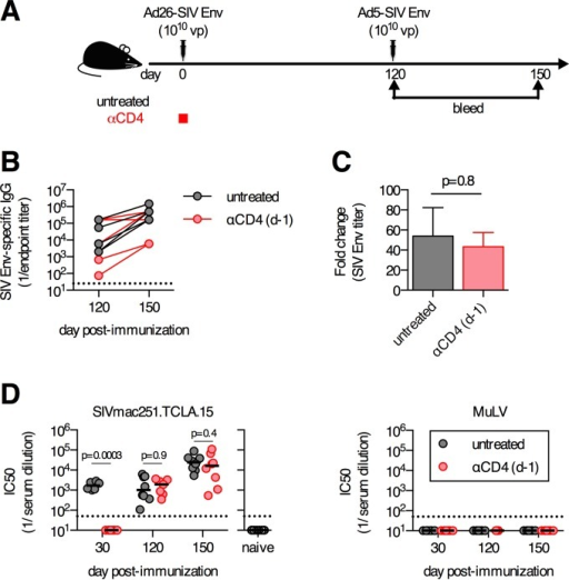Boosting capacity and functional neutralization capacity of delayed antibody responses that develop following transient CD4+ T cell depletion. (A) C57BL/6 mice were depleted of CD4+ T cells or left untreated, immunized intramuscularly with 1010 vp of Ad26-SIV Env, and boosted 4 months postprime with 1010 vp of Ad5-SIV Env. (B) SIV Env-specific antibody titers prior to and following boosting immunization. (C) Fold change in SIV Env-specific antibody responses pre- to postboost. (D) Serum 50% neutralization capacity (IC50) of tier 1A SIVmac251.TCLA.15 Env-expressing pseudoviruses or a MuLV negative-control pseudovirus. Each dot represents an individual mouse, and the line indicates the mean ± the standard error of the mean (C) or the median (D). The horizontal dotted line denotes the limit of detection for the assay (n = 6 to 8/group pooled from two experiments).