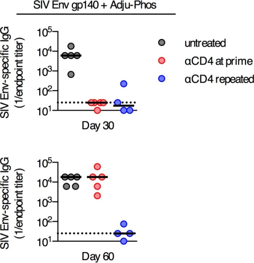 Delayed antibody responses develop following immunization with an adjuvanted soluble protein formulated in Adju-Phos but not following immunization with a replication-incompetent poxvirus vector. SIV Env-specific serum antibody titers in C57BL/6 mice immunized intramuscularly with 50 μg of SIV Env gp140 plus Adju-Phos and depleted of CD4+ T cells at the time of immunization (anti-CD4 at prime) or continuously depleted of CD4+ T cells (anti-CD4 repeated) or mice left untreated were determined. Each dot represents an individual mouse, and the line is the median. The horizontal dotted line denotes the limit of detection for the assay (n = 4 to 5/group from one experiment).